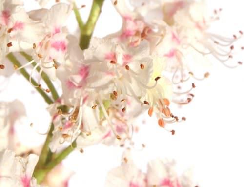 Hogyan enyhíti a Bach-virágterápia a stresszt